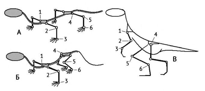 Схема положения конечностей у