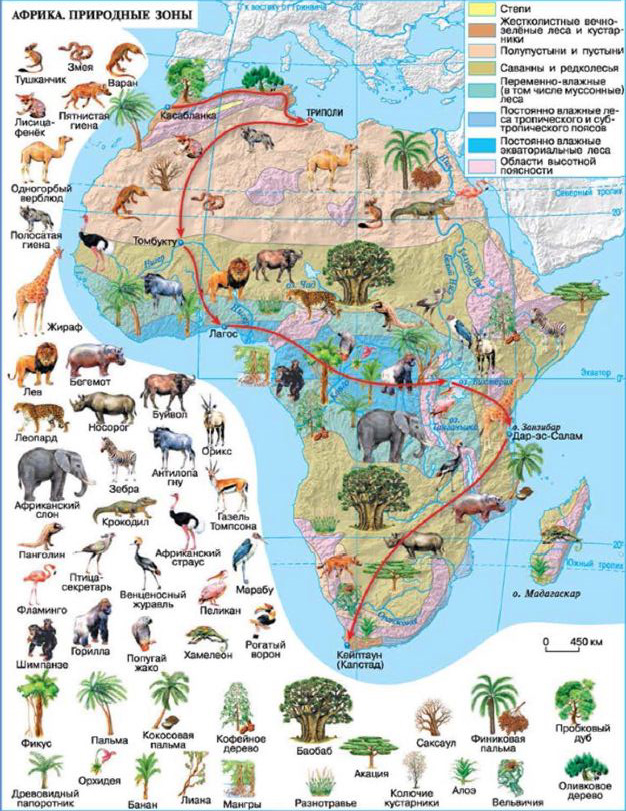 Конспект по географии 7 класс климат африки
