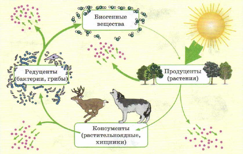 Экосистема доклад по биологии 4952