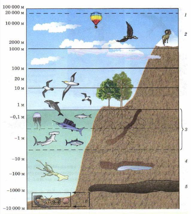 Биосфера её структура и границы Экология Реферат доклад  Рис 107 Распространение организмов в биосфере 1 уровень озонового слоя задерживающего жёсткое ультрафиолетовое излучение 2 граница снегов