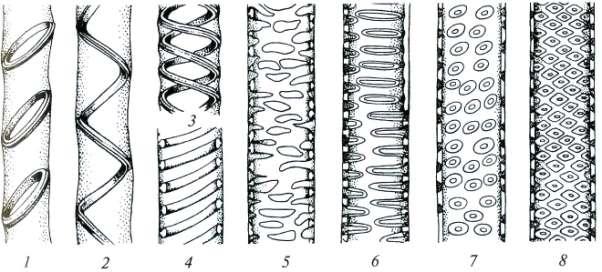 Проводящие ткани ксилема и флоэма строение особенности  Рис 13 Разные типы утолщения стенок сосудов и поровости 1 кольчатый 2 4 спиральные 5 сетчатый 6 лестничный 7 супротивная поровость
