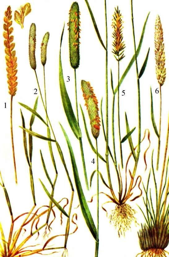 Доклад на тему луговые растения 4271