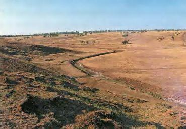Зона пустынь Экология Реферат доклад сообщение кратко  Животные и растения пустынь