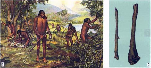 Жизнь древнейших первых людей Первобытная история Реферат  Первобытные люди Современный рисунок 2 Палка копалка и дубина