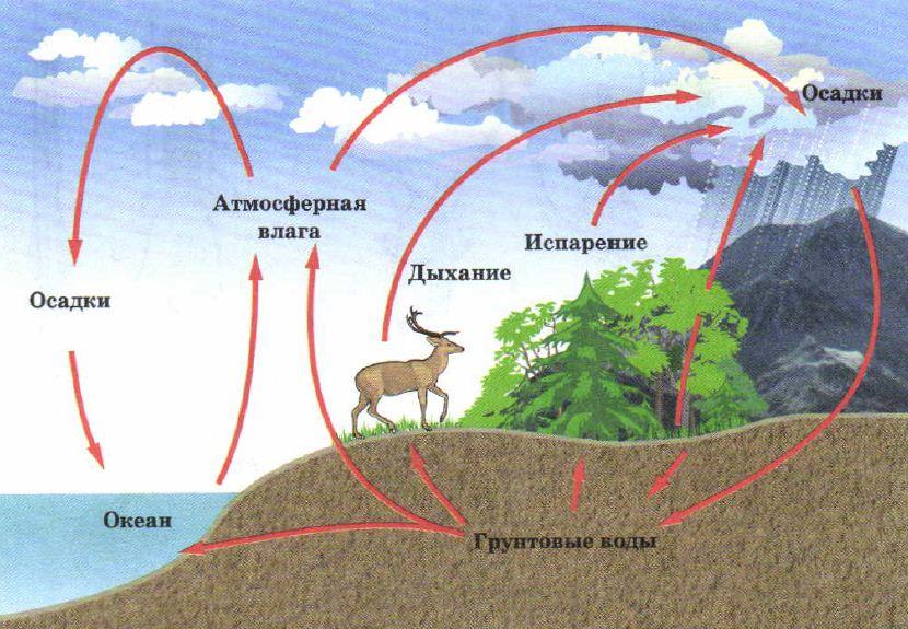 Реферат круговорот воды в природе