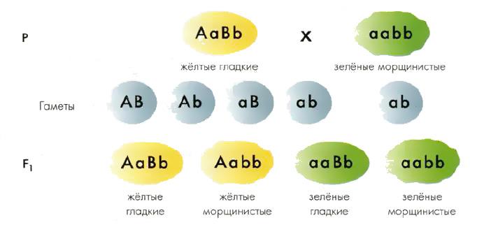 Схема наследования признаков