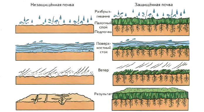 Снижение повышение и сохранение плодородия почв Ботаника  Рис 156 Эрозия пахотного слоя