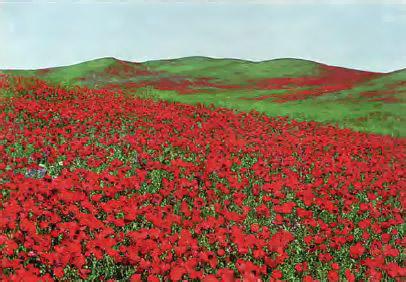 Животные и растения степи Экология Реферат доклад сообщение  Рис 166 Цветущая степь