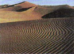 Животные и растения пустынь Экология Реферат доклад сообщение  Рис 130 Пустыня