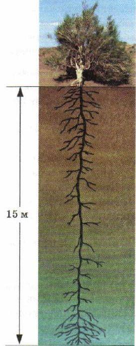 Животные и растения пустынь Экология Реферат доклад сообщение  Животные и растения пустынь